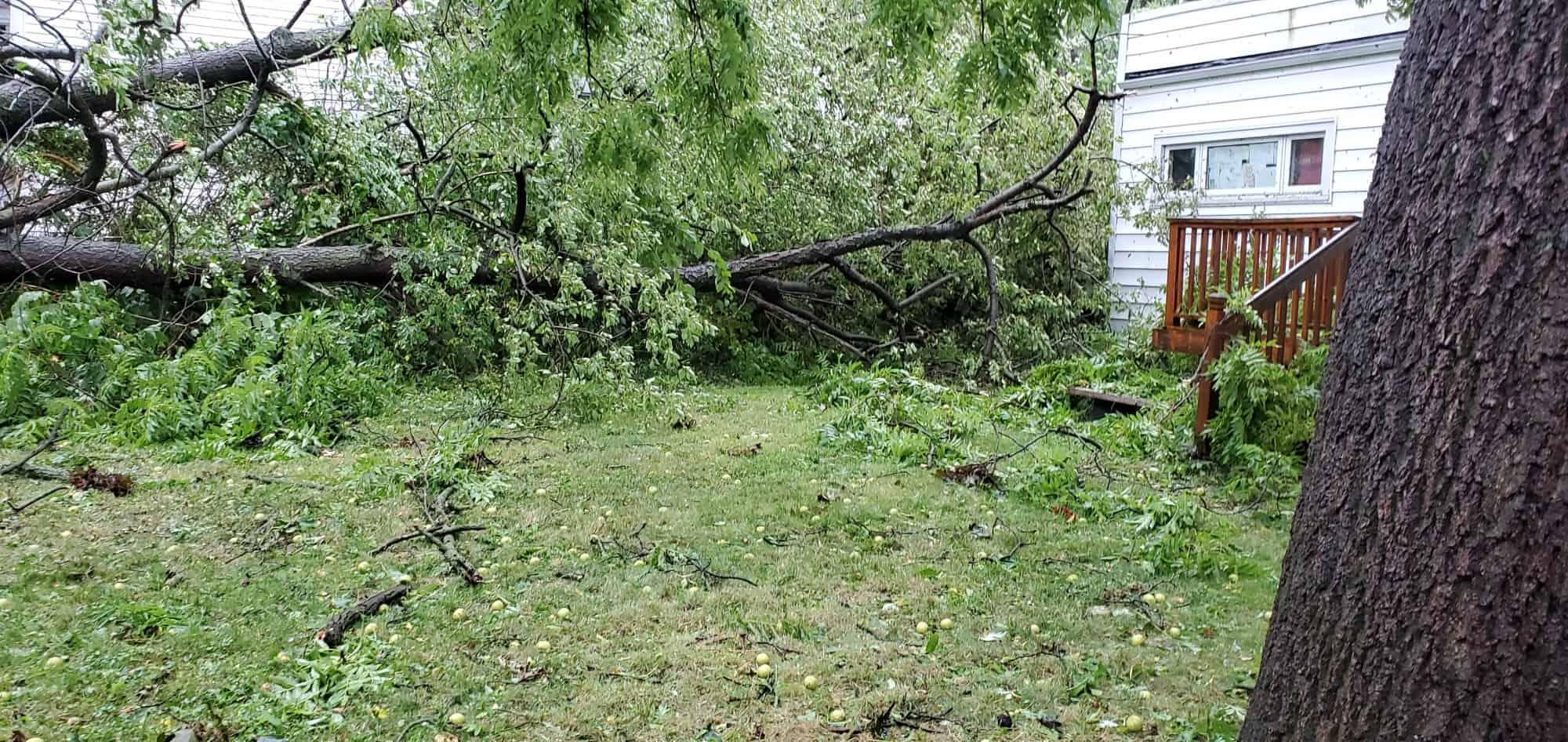 Tree down Derecho storm damage